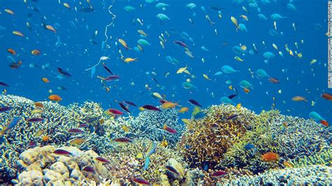 best places in the world for snorkeling 10 of the world s best snorkeling destinations most