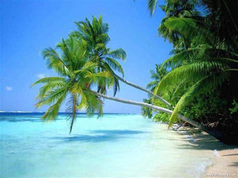 quotes  tropical paradise quotesgram