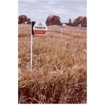 trigo estero semilla trigo estero blando de primavera semillas trigo
