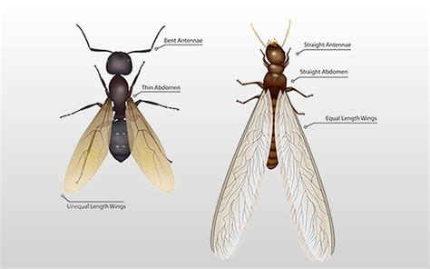 Do Flying Termites Come Out At Night