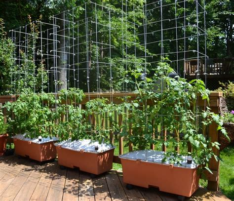 Flowers That Grow On Trellis 17 Best Images About Gardening In An Earth Box On