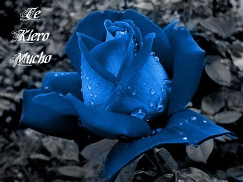 imagenes de flores azules image gallery imagenes rosas azules