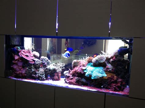 fish tank in wall amazing in wall fish tank 2017 fish 10 amazing aquariums submitted by our users nualgi aquarium