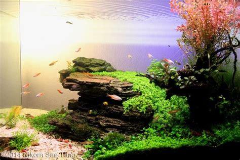 aquascape ottawa 187 scrumptious aquarium pflanzen aquascaping vale