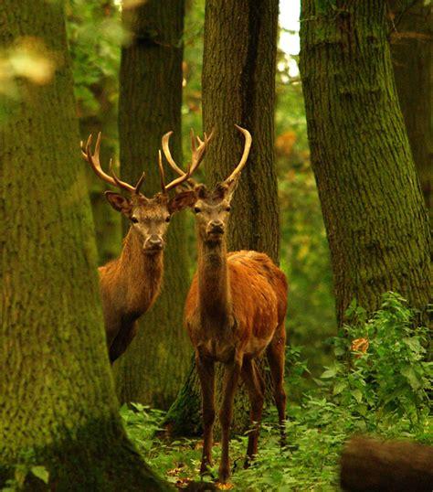 die prinzen forum fuer naturfotografen