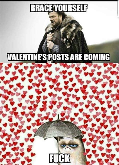 brace  meme ideas  pinterest cat love