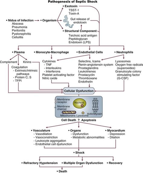 septic shock pathophysiology flowchart septic shock pathophysiology flowchart create a flowchart
