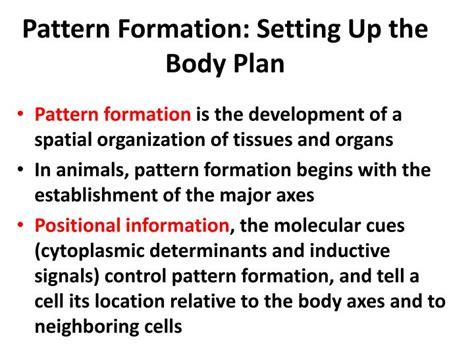 pattern formation ppt ppt developmental biology powerpoint presentation id