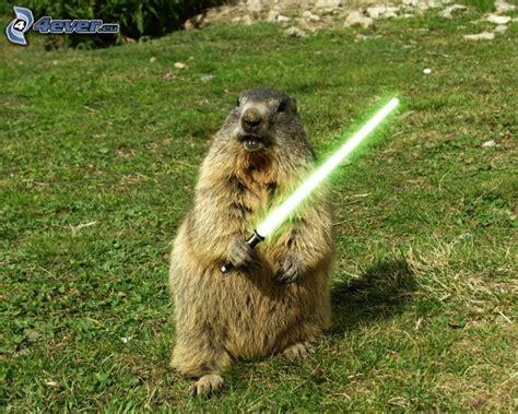 groundhog day free hd marmotte