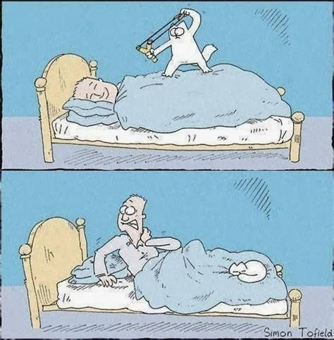 wake up a simons world s funniest cat cartoons funny joke pictures
