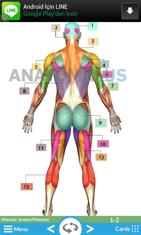 Anatomy Games For Medical Students