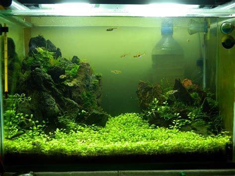 Membuat Karpet Aquascape | 6 macam tanaman karpet aquascape yang sering digunakan