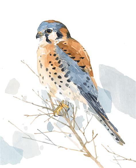 mantide religiosa porta fortuna american kestrel falcon watercolor print david
