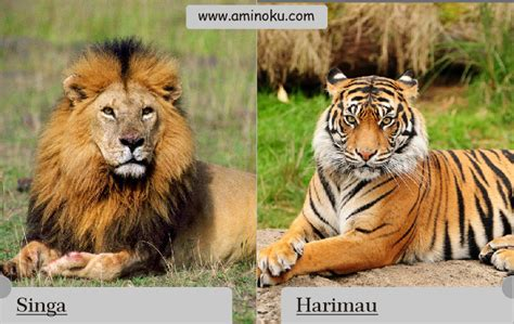 Bantal Macan Dan Singa aminoku
