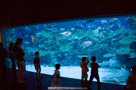 aquarium design malaysia image gallery malaysia aquarium