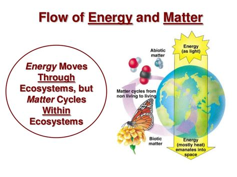 pattern of energy and matter flow energy cycle in an ecosystem images