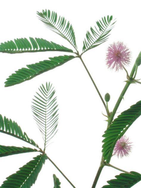 ringkasan hama  penyakit  ringkasan gerak tumbuhan