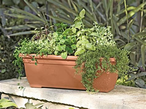 herb boxes how to grow edibles in window boxes hgtv