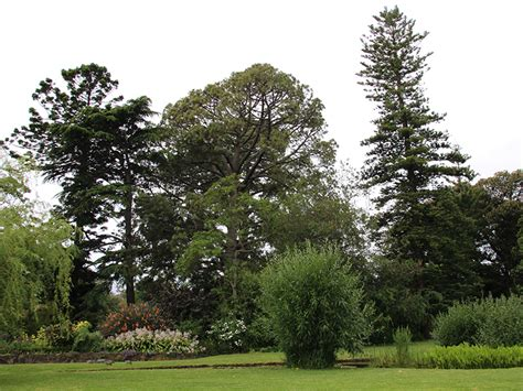 trees burnley courses offered at burnley cus friends of burnley gardens