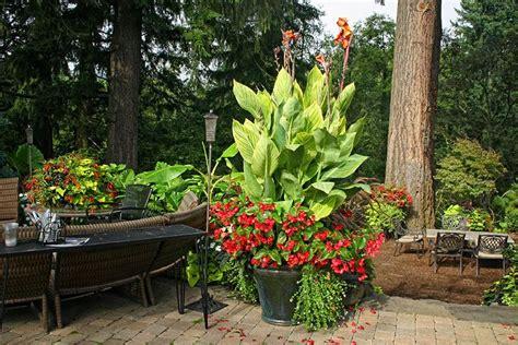 canna pretoria  begonia container mclane garden