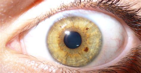 yellow eye color file yellow human eye jpg
