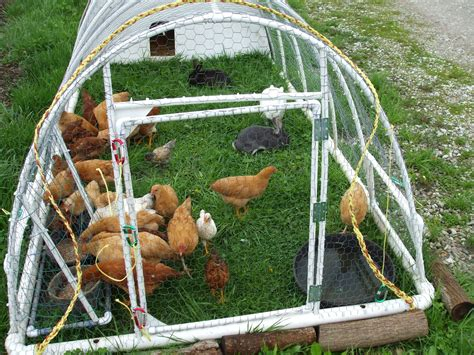 Redesigned original pvc chicken tractor lewis family farm