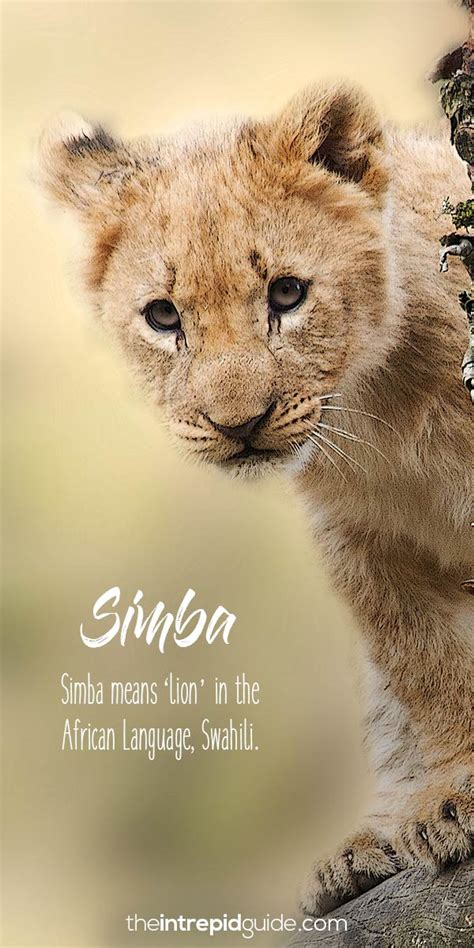 beautiful african words   lion king thatll   smile