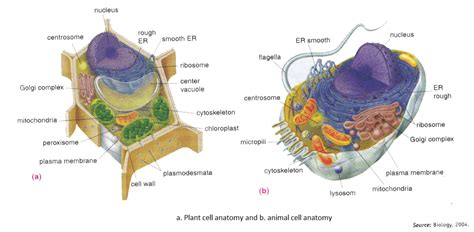 sections of a library and their functions parts of plant cell and their functions pdf images how