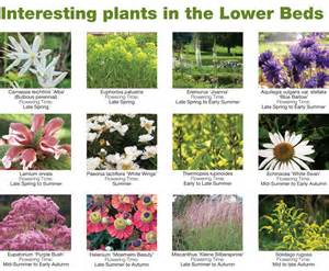 garden plants names and pictures interesting plant list trentham