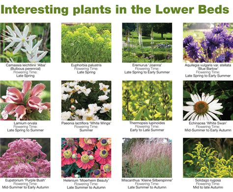 Garden Flowers List Interesting Plant List Trentham