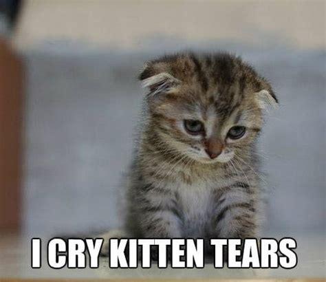 Sad Kitten Meme - image gallery kitten sad face meme