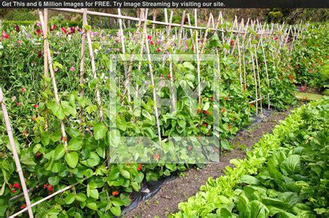 Vegetable Gardening Wallpaper Wallpapersafari Vegetable Garden Wallpaper