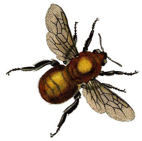 Fairy Garden Art - vintage clip art beautiful golden bee the graphics fairy