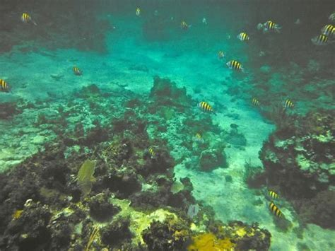 Couples Swept Away: Snorkeling   Couples Swept Away