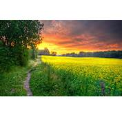 Beautiful Field Wallpapers  Most Places In The