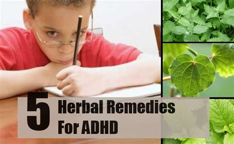 Herbal Adha 5 herbal remedies for adhd best herbs to treat attention deficit hyperactivity disorder find