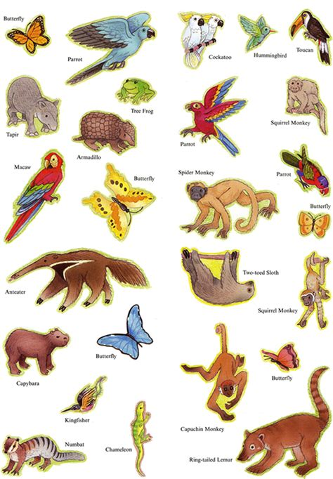 printable rainforest animal pictures welcome to dover publications