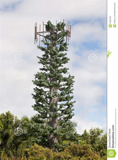 cell phone antenna tree stock image image  aerial