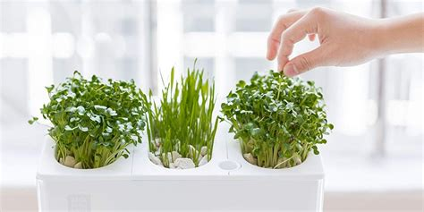 indoor herb garden ideas   indoor gardens