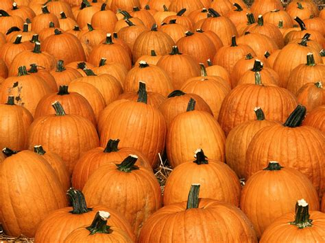 pumpkins wallpaper wallpapers pumpkin wallpapers