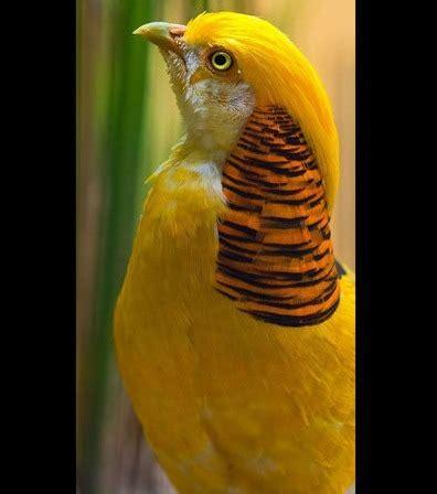132527903x planetes mysterieuses decouvrez les d 233 couvrez les 16 plus beaux oiseaux sur terre