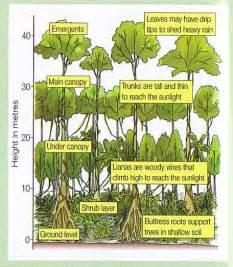 What Does Canopy Mean In Geography by Onlinegeography Lw Deforestation