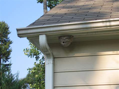 eaves house file hornets nest on house jpg wikimedia commons
