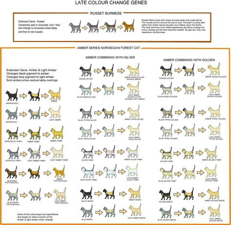 cat coat colors genetics cat coat color and pattern warriors amino