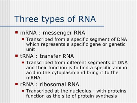3 proteins and their functions 5 dna rna protein synthesis