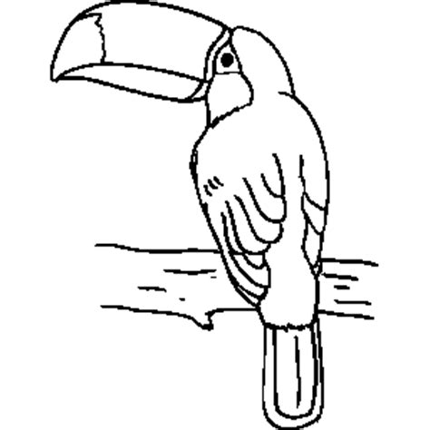 coloring page of a toucan bird toucan coloring sheet clipart best clipart best