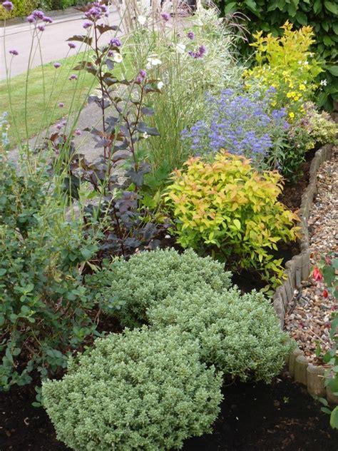 low maintenance plants for the garden garden ideas