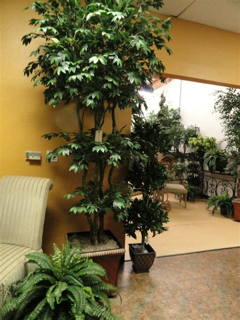 artificial trees home decor artificial trees and artificial plants from artificial bloom home d 233 cor in san diego ca