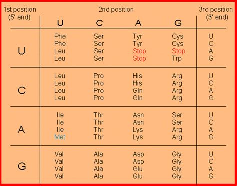 Genetic Code Table by Standard Genetic Code Table Images