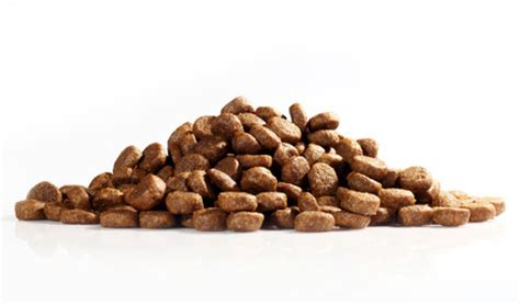 all god s creatures diamond pet foods recall 3 what s the deal with low sodium dog food